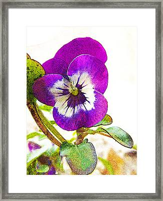 Purple Viola Framed Print by Robin Hewitt