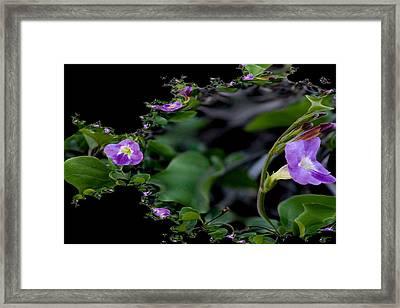 Purple Vitex 2 Framed Print by Elizabeth  Doran