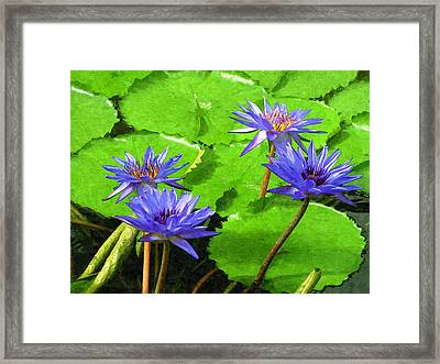 Purple Water Lilies Framed Print by Design Windmill