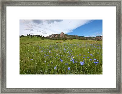 Purple Wildflowers In Boulder, Colorado Framed Print by Lightvision, LLC