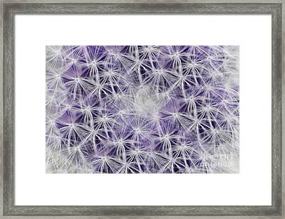 Purple Wishes Framed Print
