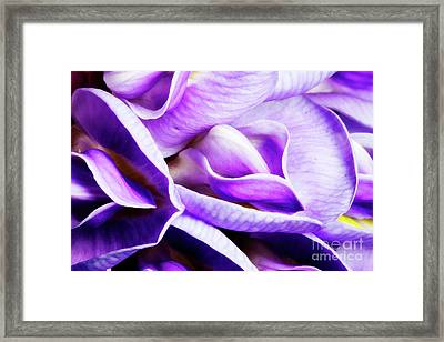 Purple Wisteria Fower Framed Print