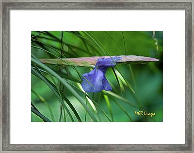 Purple Wonder Framed Print by Margaret Buchanan