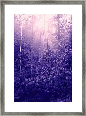 Purple Woods Framed Print by Nina Fosdick