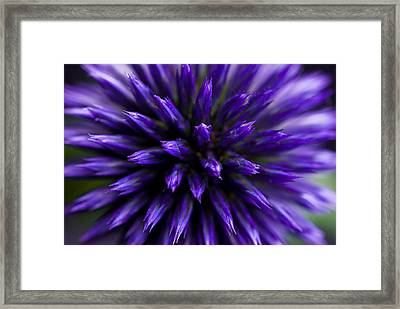 Framed Print featuring the photograph Purple Zoom by Trevor Chriss