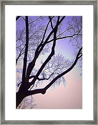 Purpler Branch Framed Print by Dan Stone