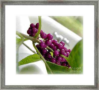 Purples And Greens Framed Print by Tisha  Clinkenbeard