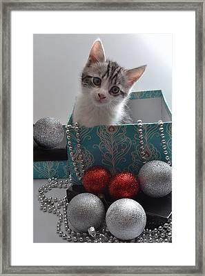 Purr-fect Christmas. Framed Print by Terence Davis