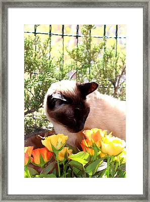 Purrfect Scent Framed Print by Sonja Bonitto