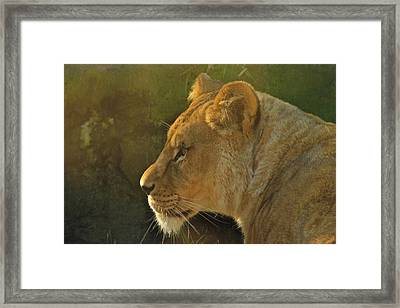 Pursuit Of Pride Framed Print
