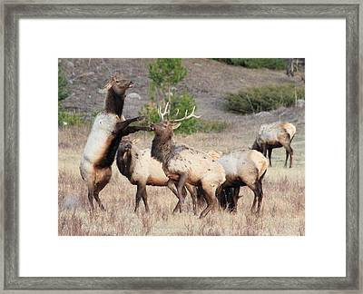 Put Up Your Dukes Framed Print