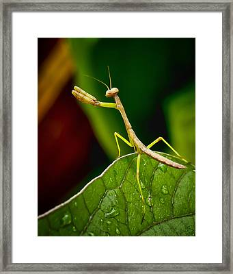 Put Up Your Dukes Framed Print by Michael Putnam