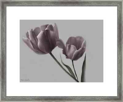 Putty Pale Tulips  Framed Print by Debra     Vatalaro