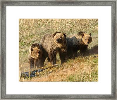Quad Mom At Mammoth Terraces I Framed Print by Amy Gerber