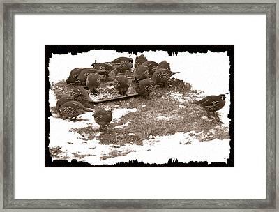 Quail Having Lunch Framed Print by Will Borden