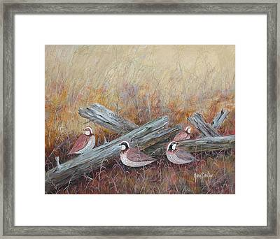 Quail In The Grass Framed Print