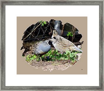 Quail Mates Framed Print by Will Borden