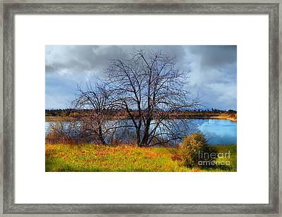 Quarry Lakes In Fremont California . 7d12636 Framed Print by Wingsdomain Art and Photography