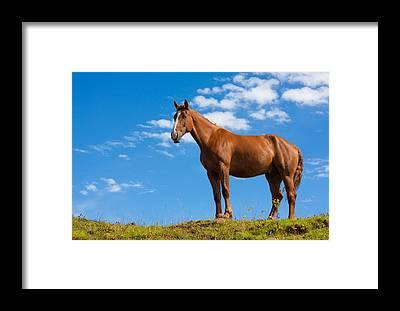 Red Dun Horse Framed Prints