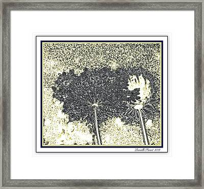 Queen Ann Lace Illustrated Framed Print by Danielle  Parent