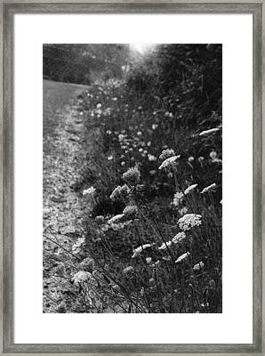 Queen Anne's Lace On Beachcrest Drive In Neskowin Oregon Framed Print by Christina Weber