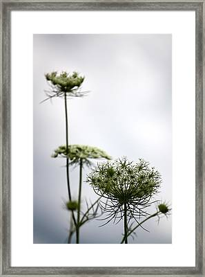 Framed Print featuring the photograph Queen Annes Lace by Penny Hunt