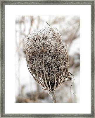 Framed Print featuring the mixed media Queen Anne's Lace Seed Pods by Bruce Ritchie