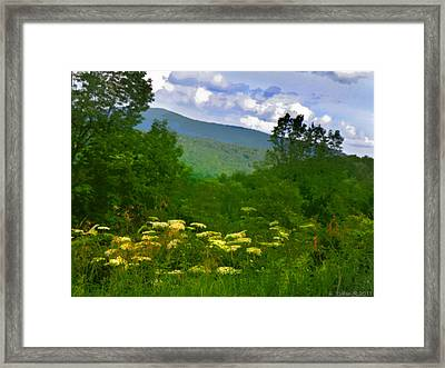 Queen Anne's Lace With A View Framed Print
