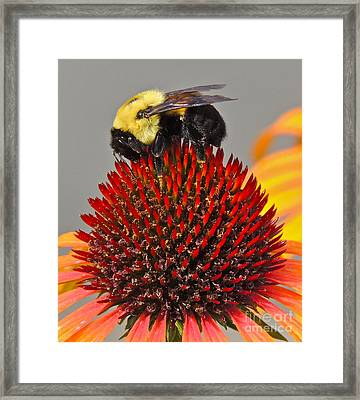 Framed Print featuring the photograph Queen Bee by Eve Spring