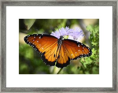 Queen Butterfly On Flower  Framed Print
