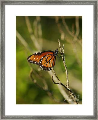 Queen On A Twig Framed Print