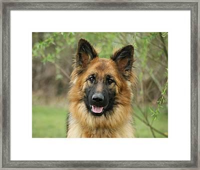 Queena Framed Print by Sandy Keeton