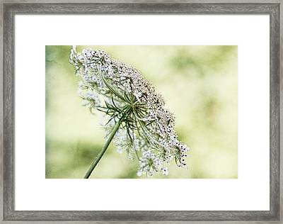 Queen's Lace Framed Print