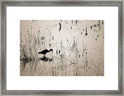 Quiet Findings Framed Print by Jennifer  Lane