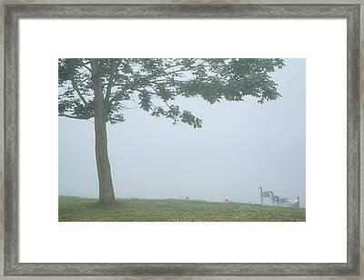Quiet Fog Rolling In Framed Print by Karol Livote