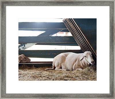Quiet Moment Framed Print by Tammy Lee Bradley