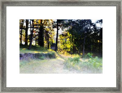 Quiet Morning In The Woods Framed Print by Bill Cannon