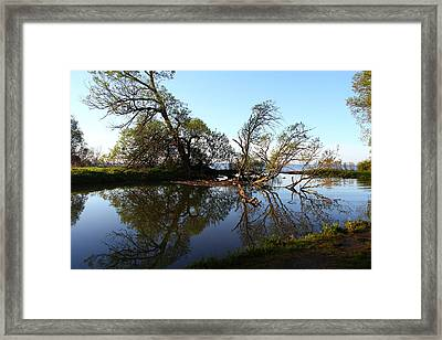 Framed Print featuring the photograph Quiet Reflection by Davandra Cribbie