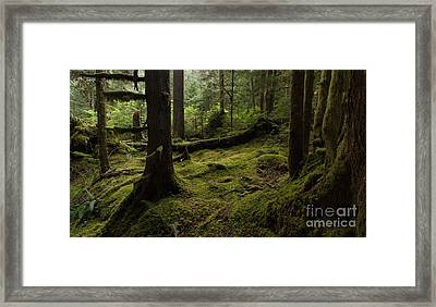 Quietly Alive Framed Print