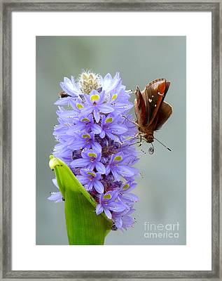 Quilling Butterfly Framed Print by Renee Trenholm