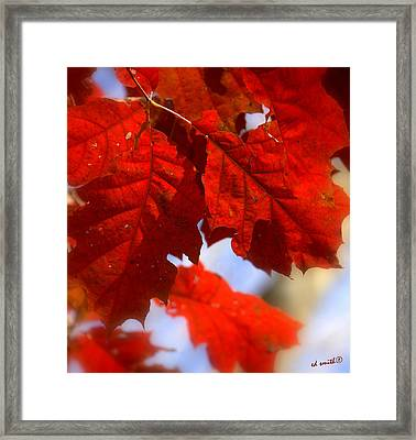 Quilted Framed Print by Ed Smith