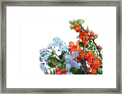 Framed Print featuring the photograph Quince Chaenomeles And Forget Me Nots Myosotis  Postcard  by Aleksandr Volkov
