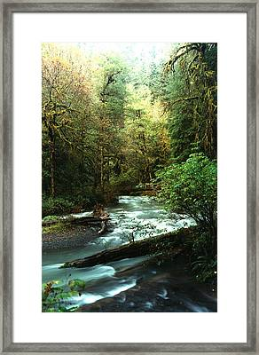 Framed Print featuring the photograph Quineault Rain Forest by Rick Frost
