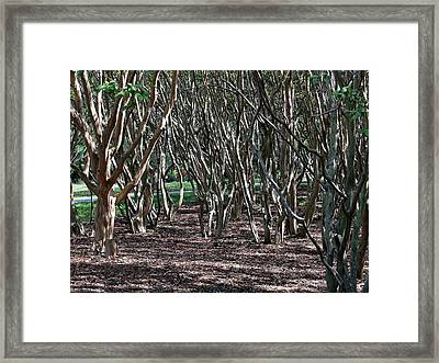 Quirky Trees Framed Print