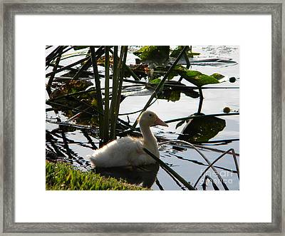 Quite Afternoon Framed Print by Ernie Cornish