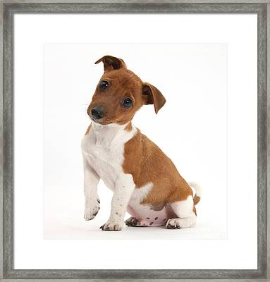 Quizzical Puppy Framed Print