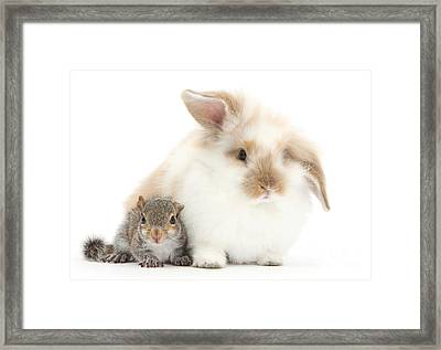 Rabbit And Squirrel Framed Print by Mark Taylor
