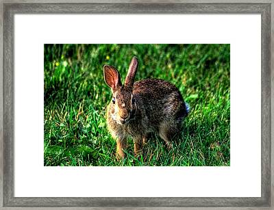 Rabbit Framed Print by Andre Faubert