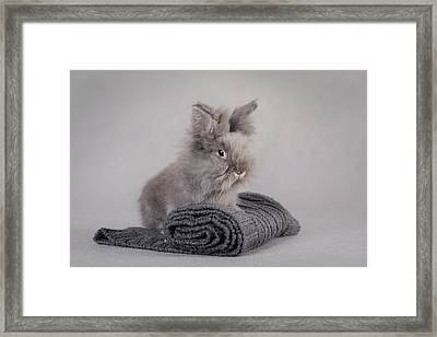 Rabbit At Grey Background Framed Print by Waldek Dabrowski