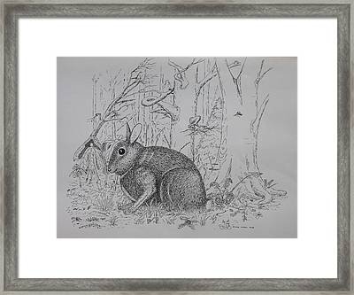 Rabbit In Woodland Framed Print by Daniel Reed